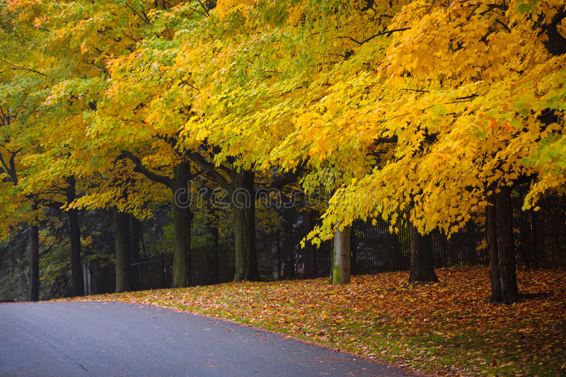 Fall road with colorful trees royalty free stock images