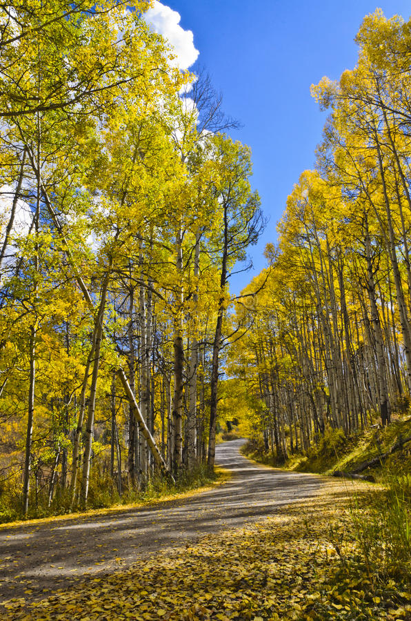 Free Fall Road On The Grand Mesa 2 Stock Image - 21753041
