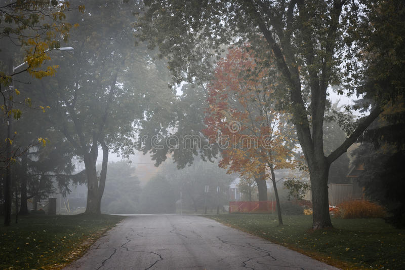 Download Fall Road With Trees In Fog Stock Images - Image: 27689694