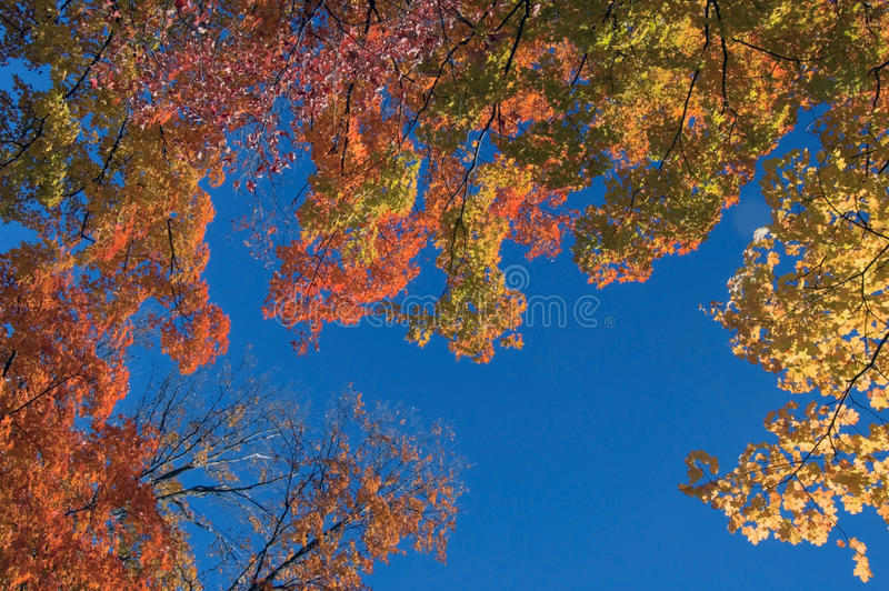 Fall's colorful tree stock photos