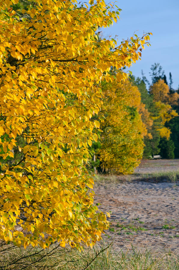 Fall's colorful trees. In park near Superior Lake. Ontario, Canada stock images