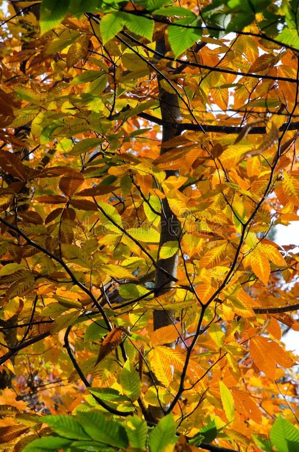 Fall`s colorful trees stock images