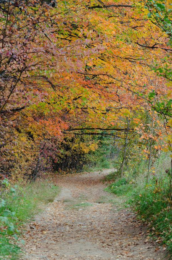 Fall`s colorful trees royalty free stock photos