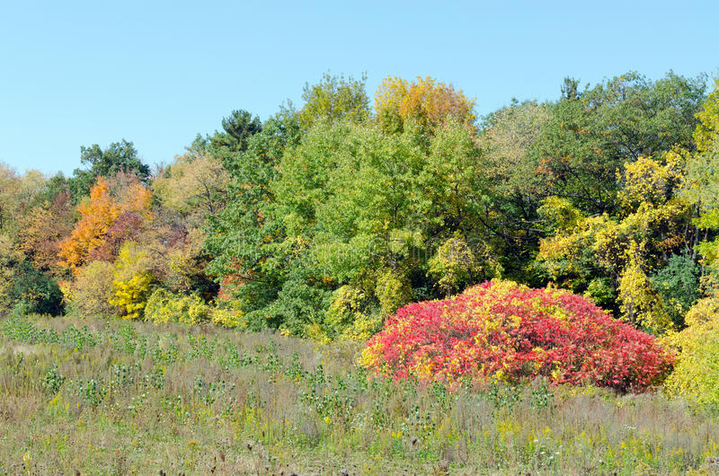 Fall's colorful trees. In park. Ontario, Canada stock photo