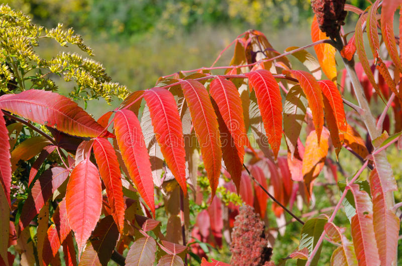 Fall's colorful trees. In park. Ontario, Canada stock photos