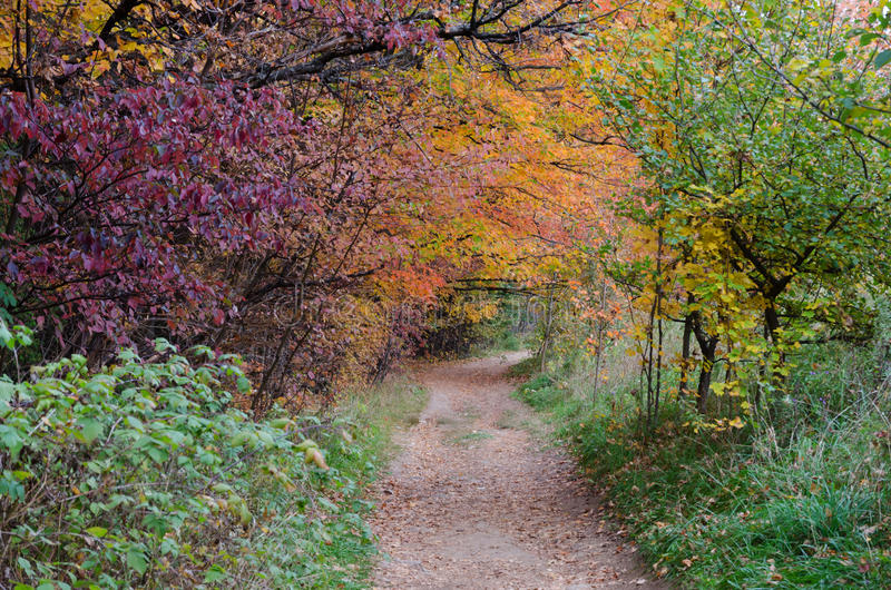 Fall's colorful trees. In park. Ontario, Canada royalty free stock photo
