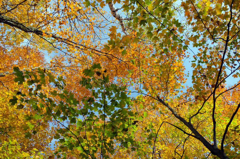 Fall's colorful trees. In park. Ontario, Canada stock image
