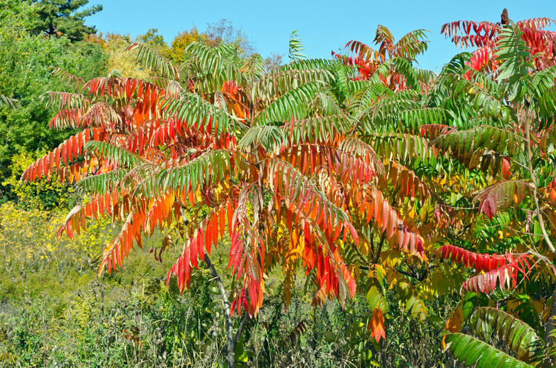 Fall's colorful trees. In park. Ontario, Canada royalty free stock photography
