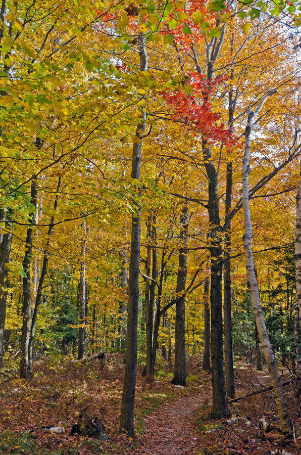 Fall's colorful trees. In park. Ontario, Canada stock photography