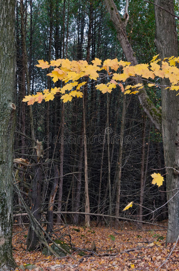 Fall's colorful trees royalty free stock photos