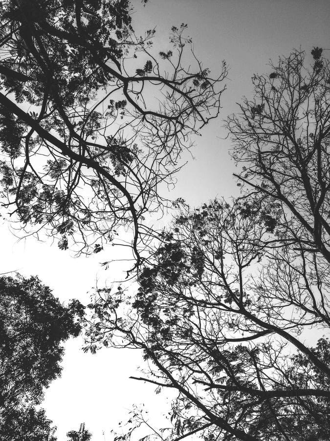 Fall& x27; s silhouet royalty-vrije stock afbeelding