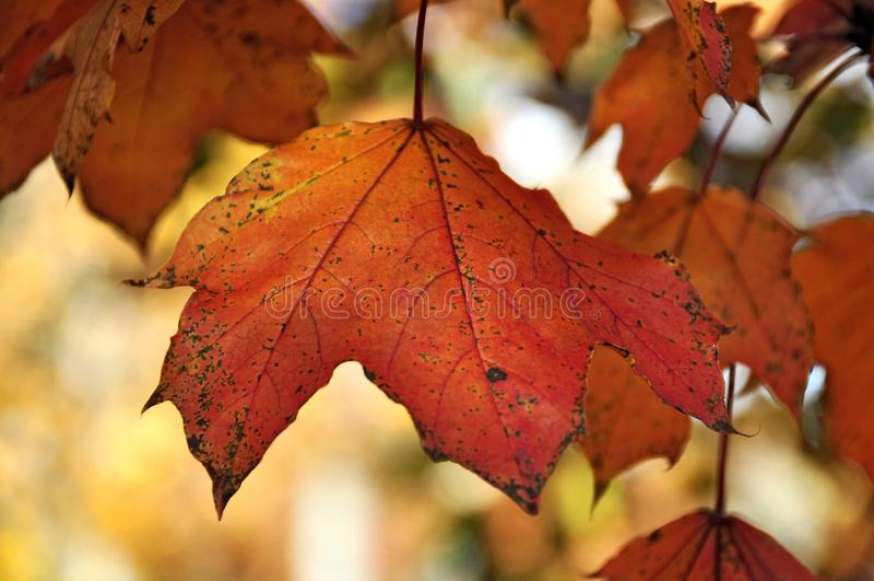Fall in Saratoga stock photos
