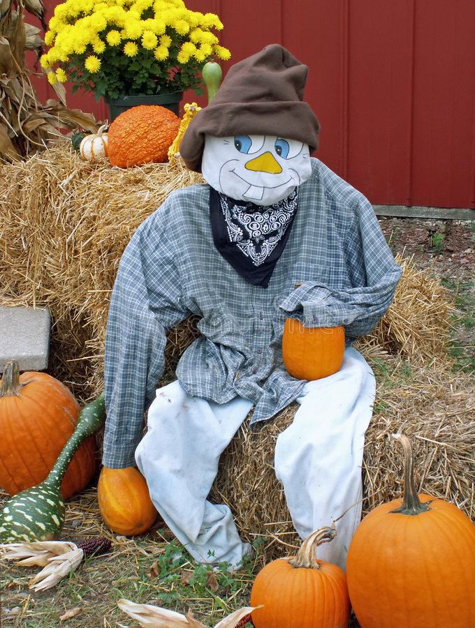 Fall scarecrow. Fall scene with scarecrow, pumpkins, mums, hay royalty free stock photo