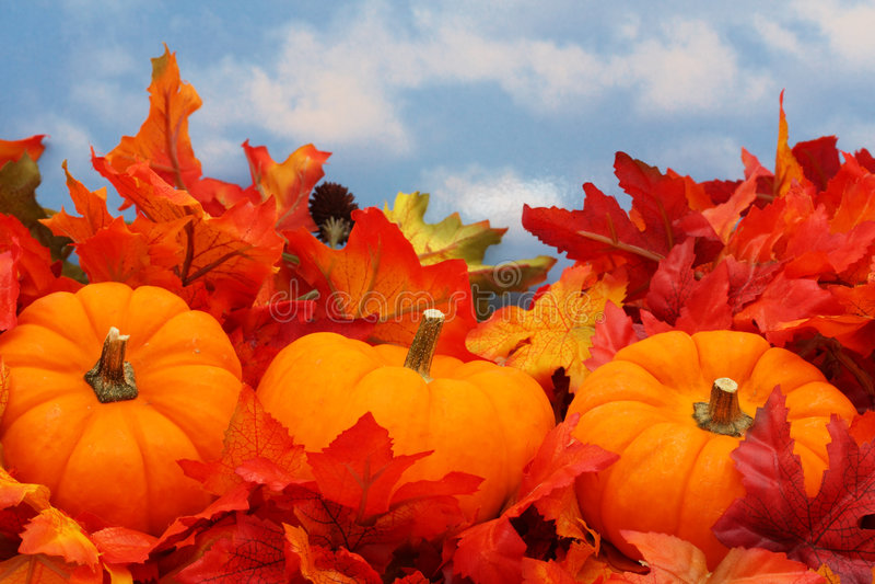 Fall Scene stock images
