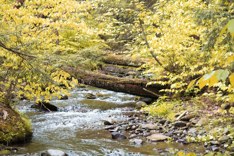 Fall scene in woods of brook stock image