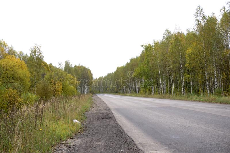 Fall season colored dirt road with beautiful birch trees at roadside . royalty free stock image