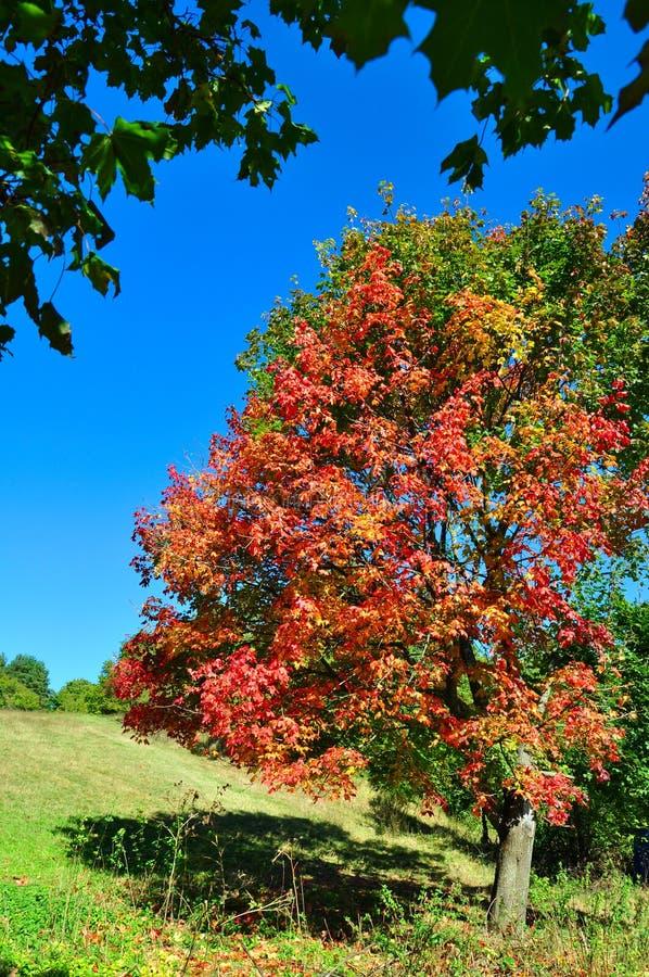 Fall season colors stock image