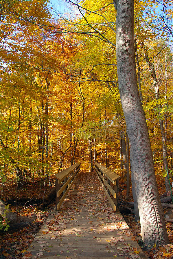 Free Fall Season Colors Trail Royalty Free Stock Photos - 1272978