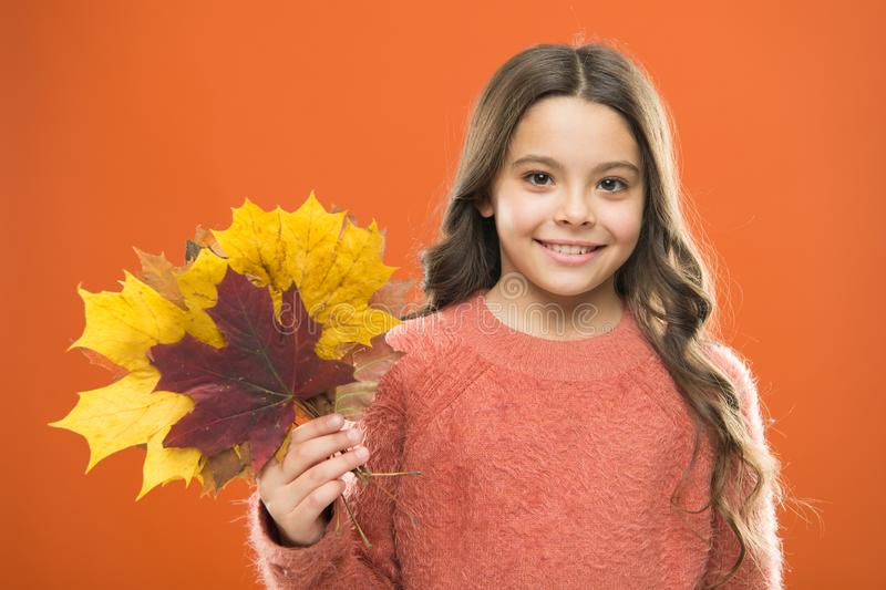 Fall season. fallen leaves bunch. happy small girl with maple leaf. girl child in sweater. Autumn mood. autumn kid stock photography