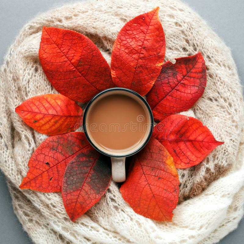 Fall season, leisure time, morning cocoa, sunday relax composition. Cup of hot cocoa and autumn leaves, warm knitted scarf, gray stock photography