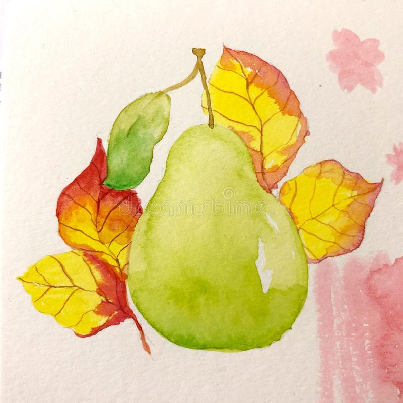 Free FALL SEASON PEAR AND LEAVES Stock Images - 146406744