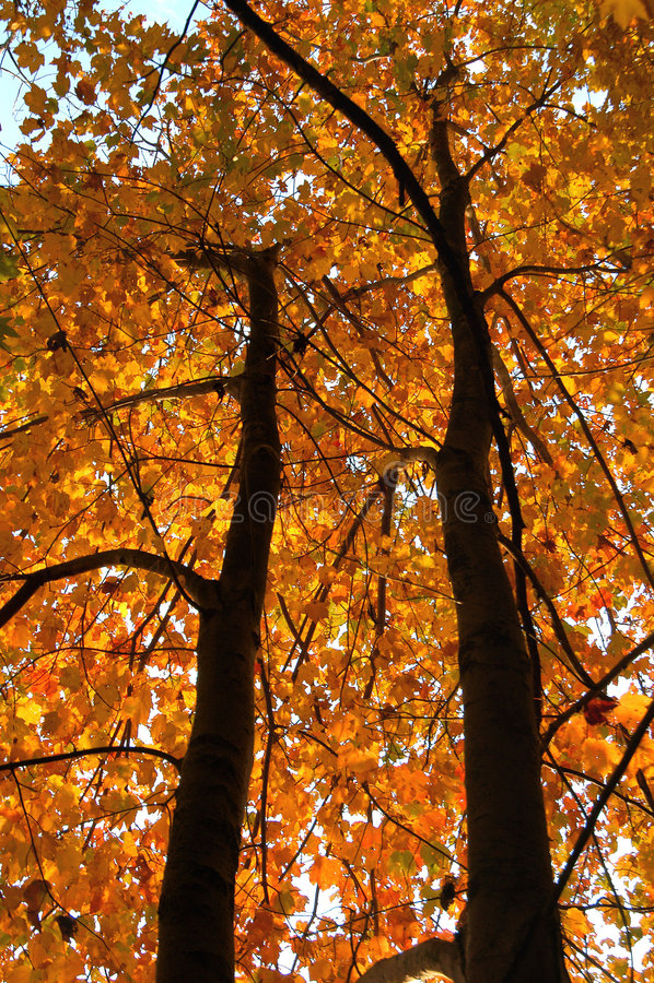 Free Fall Season Tree Stock Photos - 583653
