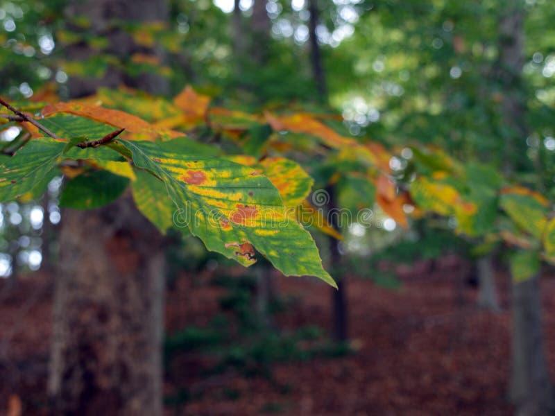 Fall Season woods backdrop royalty free stock photos