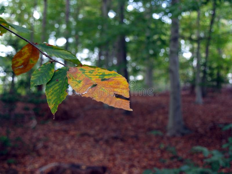 Fall Season woods backdrop stock photo