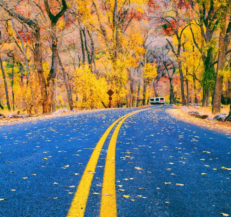 Fall season. At Zion National park stock photography