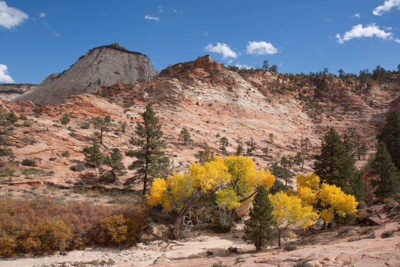 Download Fall Season At Zion Stock Photo - Image: 31014990