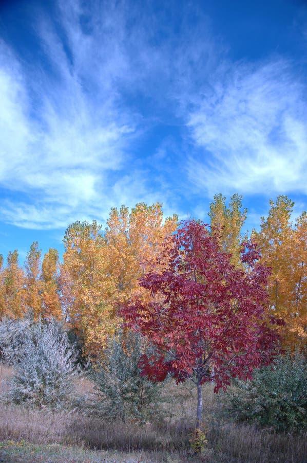 Fall See 269 stockfotografie