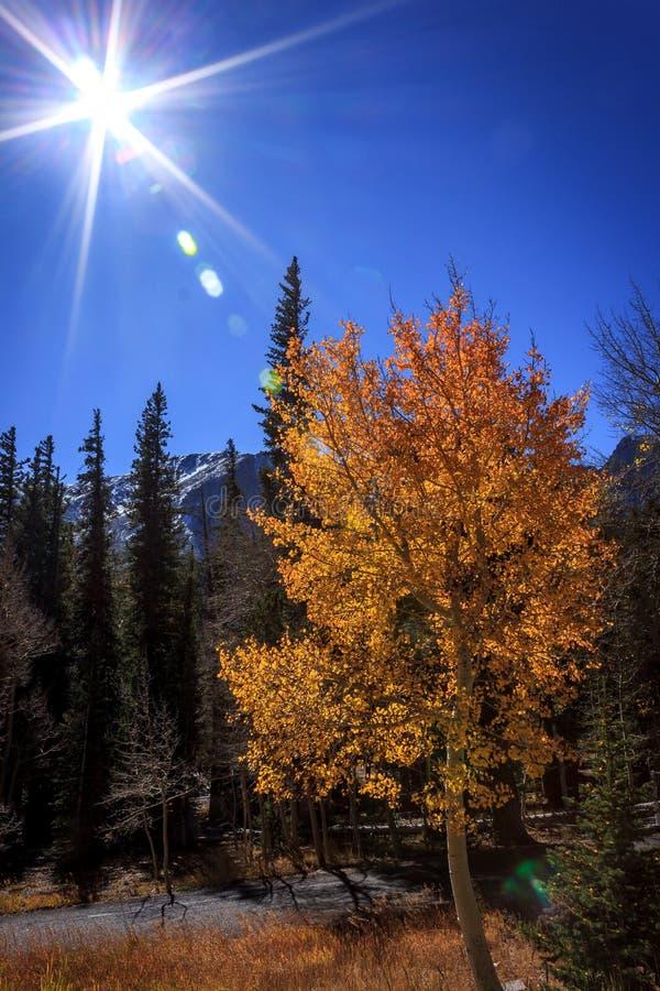 Fall-Sonnenlicht lizenzfreie stockbilder