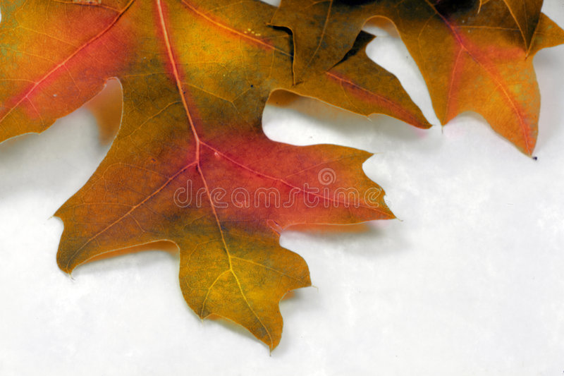 Fall spectacular close up royalty free stock photos