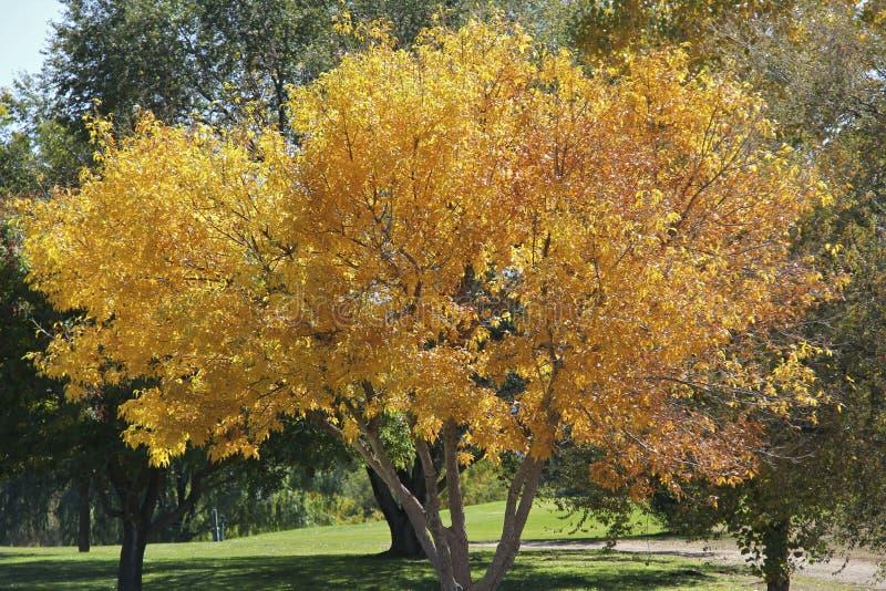 Download Fall Splendor stock image. Image of outdoor, landscape - 21676495