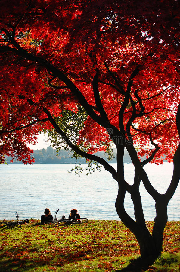 The fall in Stanley Park, Vancouver. royalty free stock photography