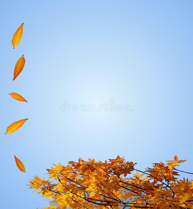 Fall Stationary stock photo