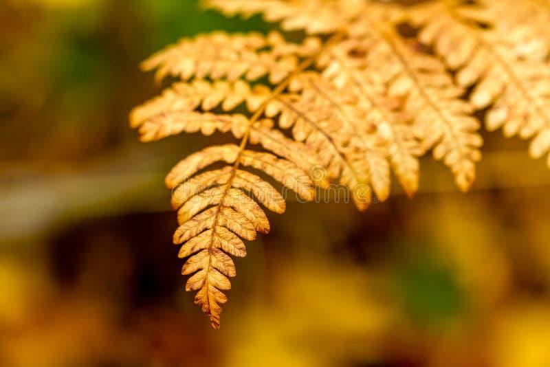 Fall in Steamboat Springs Colorado lizenzfreie stockfotografie