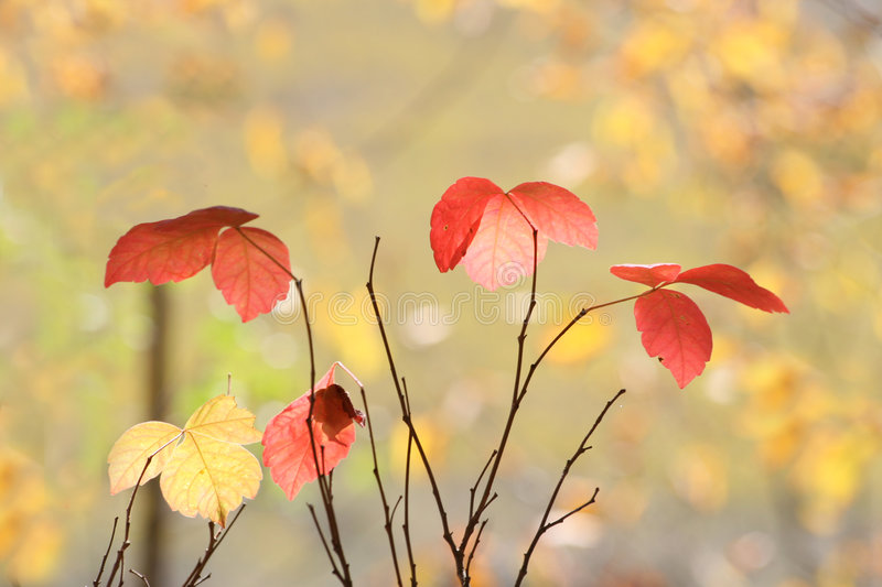 Download Fall Still Life stock photo. Image of tree, background - 3434876