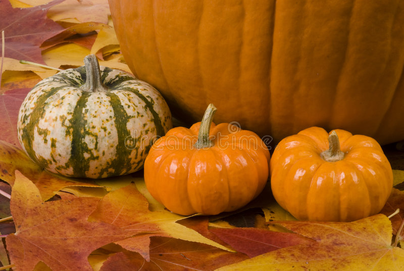 Download Fall Still Life stock photo. Image of gourd, leaf, colorful - 7012452