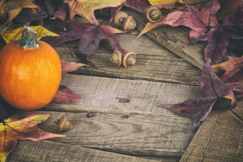 Fall Still Life con Mini Pumpkin e Maple Foglie su pannelli di legno Rustic come elemento di design del Ringraziamento o Hallowee immagini stock libere da diritti