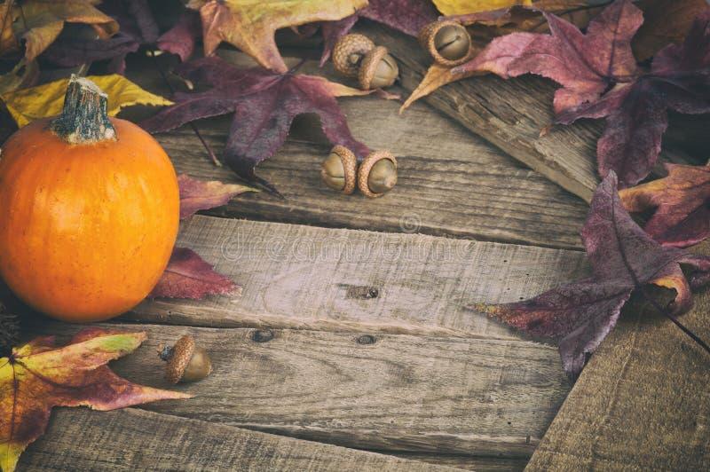 Fall still Life med Mini Pumpkin och Maple Leaves på Rustic Wood-skivor som designelement av Thankgiving eller Halloween, kopiera royaltyfria bilder