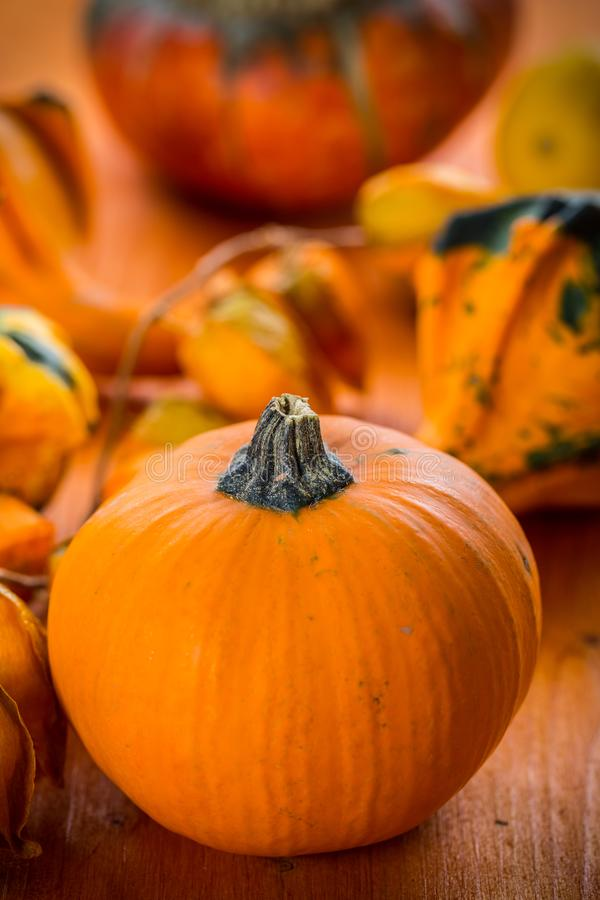 Fall Still Life with pumpkins and gourds royalty-vrije stock foto's