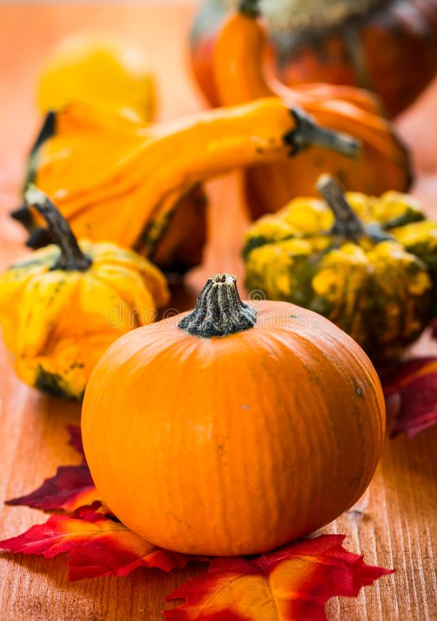 Fall Still Life with pumpkins and gourds royalty-vrije stock afbeelding