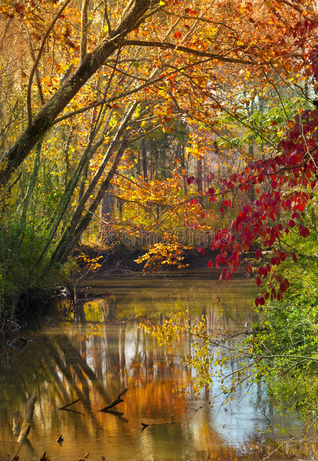 Download Fall Stream stock image. Image of green, colorful, vivid - 26411389