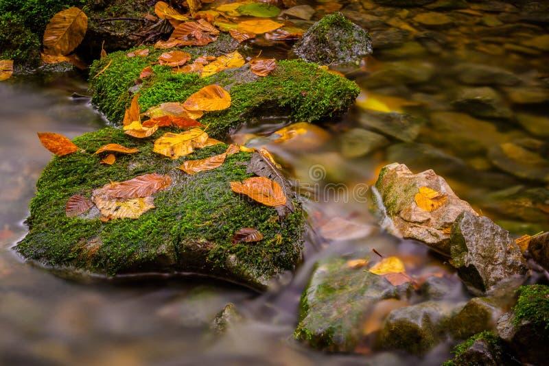 Fall stream stock image