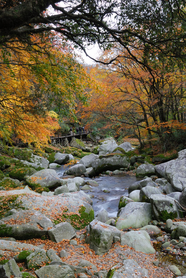 In the fall of the stream stock photo