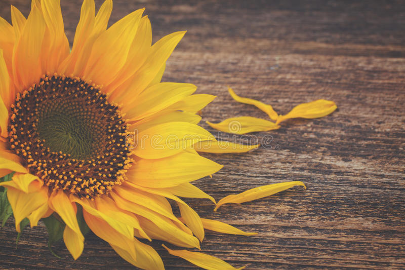 Download Fall Sunflowers On Wood Stock Image Of Autumn