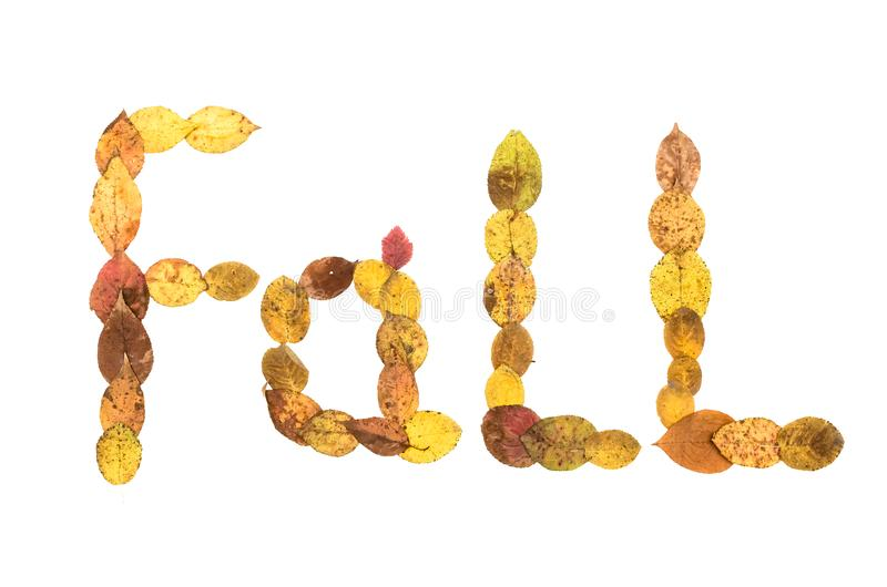 Fall text inscription made of fallen leaves isolated on white background. Autumn foliage vector illustration