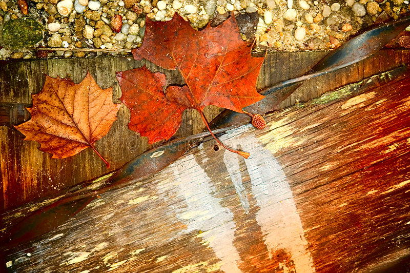 Fall textures. Leaves wood rocks and metal for a fall background. The wood piece is for copy space