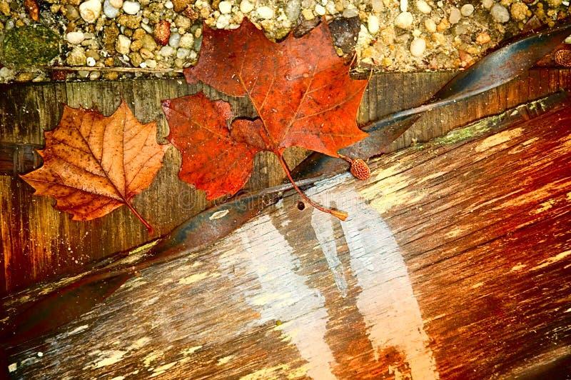 Download Fall textures stock photo. Image of season, colors, metal - 6677802